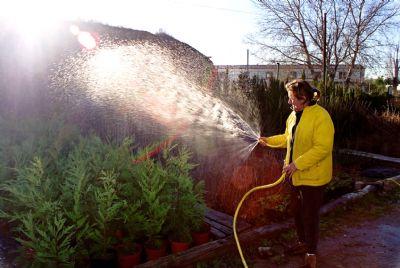 Regando plantas agricultura jardineria