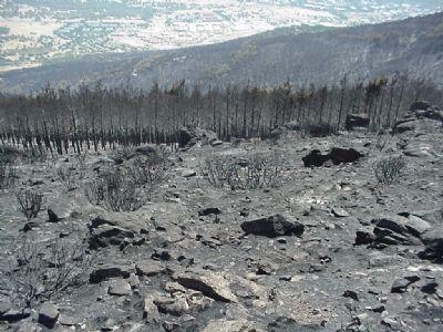 incendio área quemada abantos